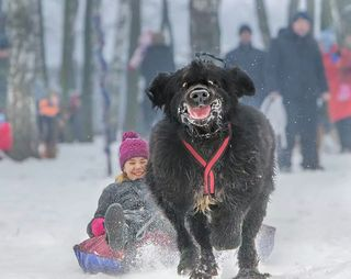 Funny-dog-pulling-kid-on-sled